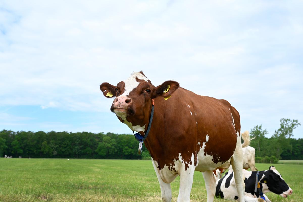 Bio-Kuh Piva